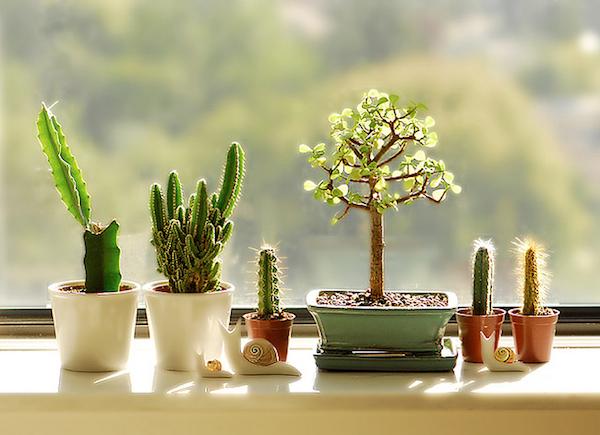 Sunday Sessions #2 | SucculentSunday