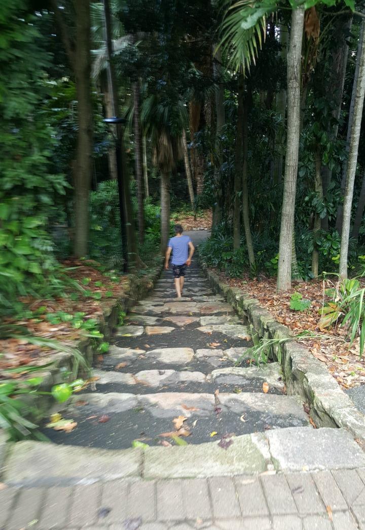 Man In rainforest