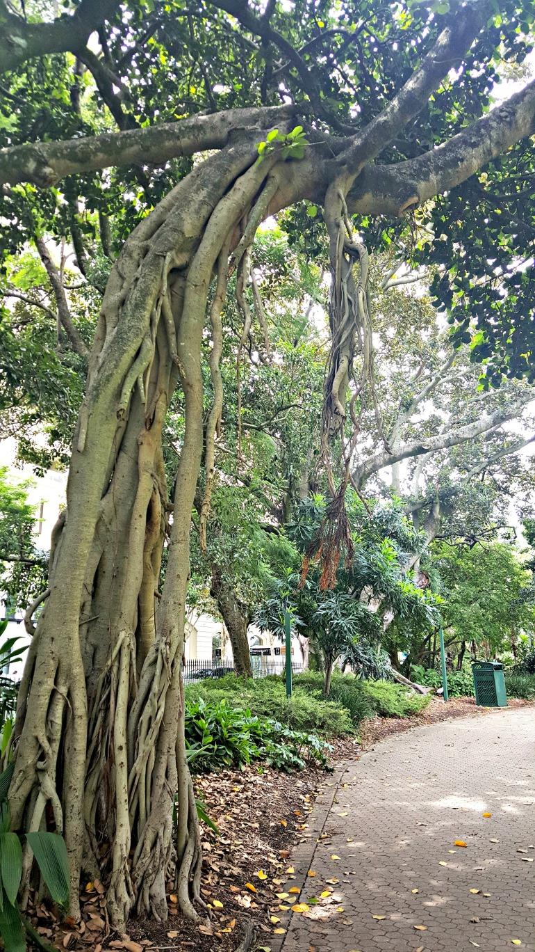 tree follage 2