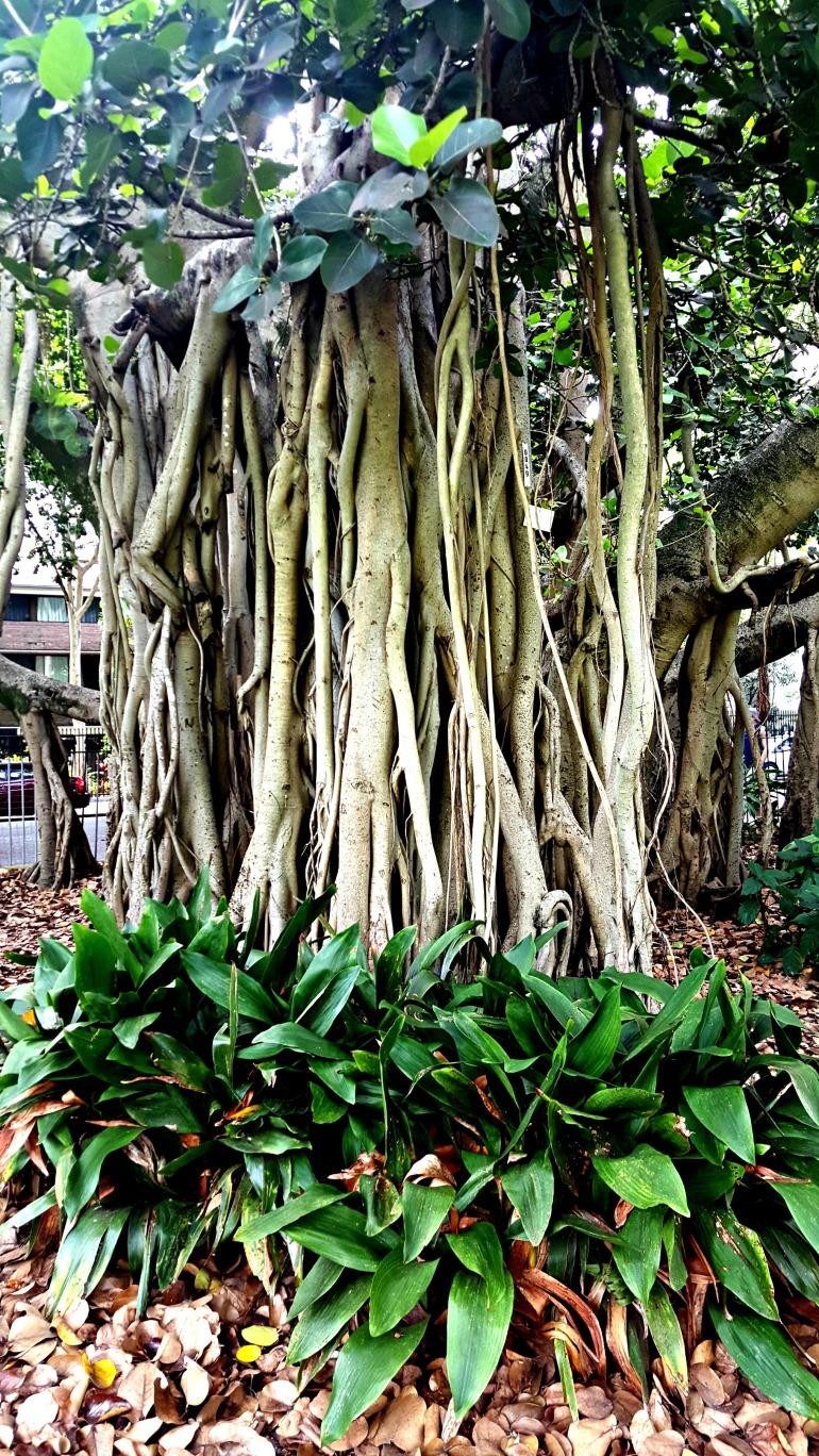 tree follage