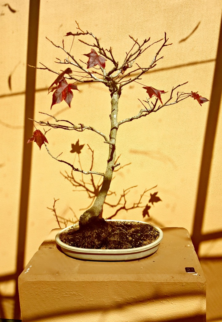 Sunday Session #5: Discovering The Art ofBonsai…